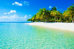 british-virgin-islands-beach-and-palms